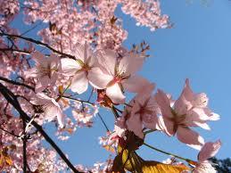 Spring Begins